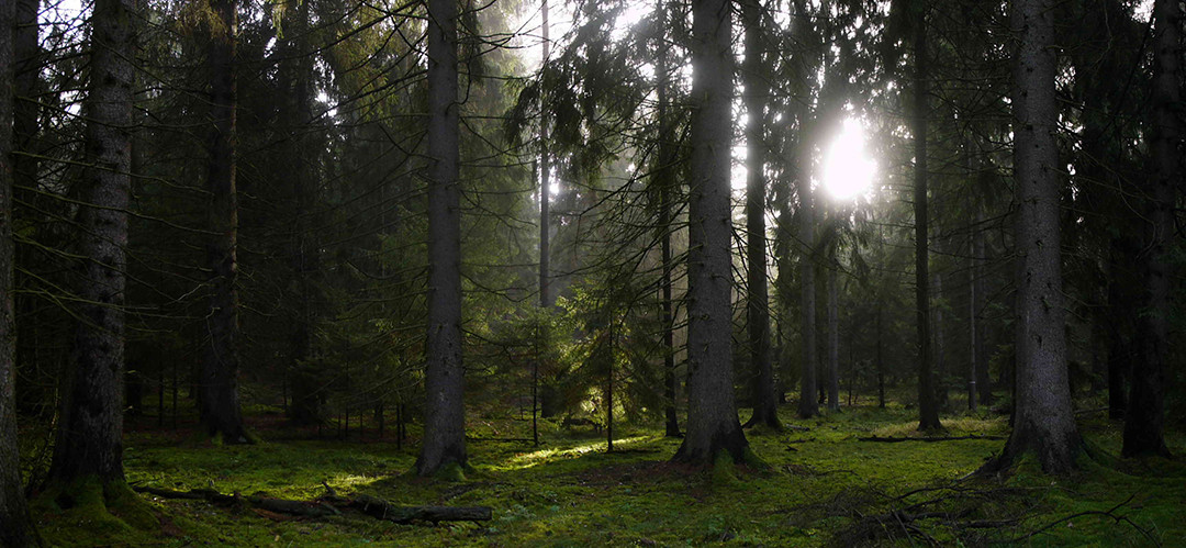 BERLIN_Biesow-Forest_18